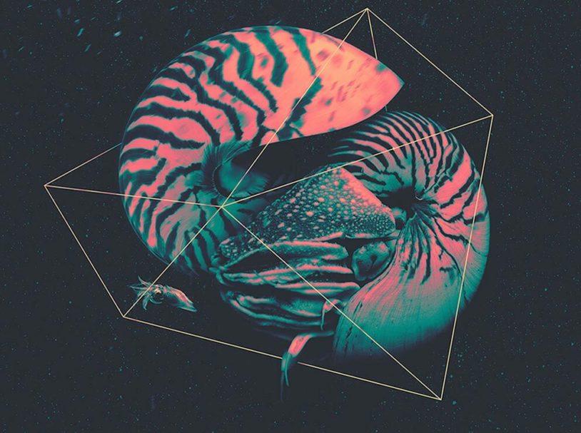 Ocean life of magnetic shells